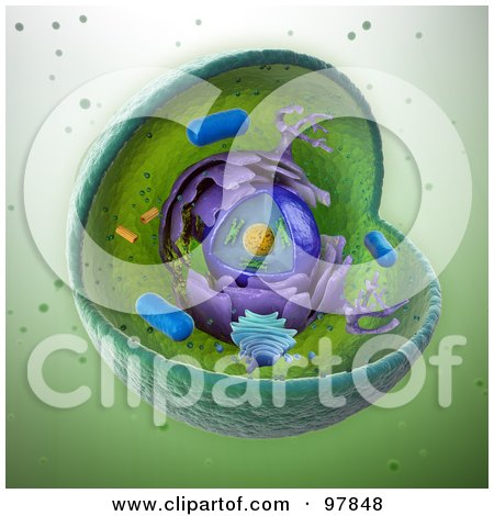 Royalty-Free (RF) Clipart Illustration of a Scientifically Correct 3d Animal Cell by Mopic