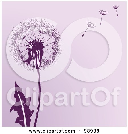 Purple Dandelion Background With Seeds Floating In The Wind Posters, Art Prints