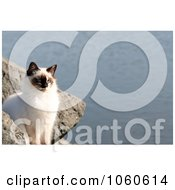 Stock Photo Of A Feral Cat Sitting On A Boulder Beside River by Kenny G Adams