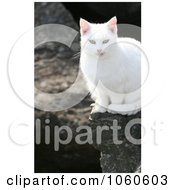 Stock Photo Of A Feral White Cat Sitting On A Boulder by Kenny G Adams