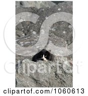 Stock Photo Of A Homeless Black And White Cat Peeking Behind A Rock by Kenny G Adams