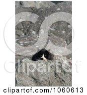 Stock Photo Of A Homeless BlackAmpWhite Cat Peeking Behind A Rock by Kenny G Adams