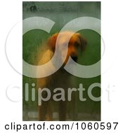 Stock Photo Of A Male Yellow Labrador Dog Standing At The Front Door by Kenny G Adams