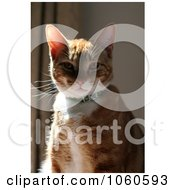 Stock Photo Of An Orange Calico Cat Sitting In The Sun by Kenny G Adams