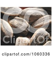 Sunflower Seeds In The Shell Macro Stock Photo by Kenny G Adams