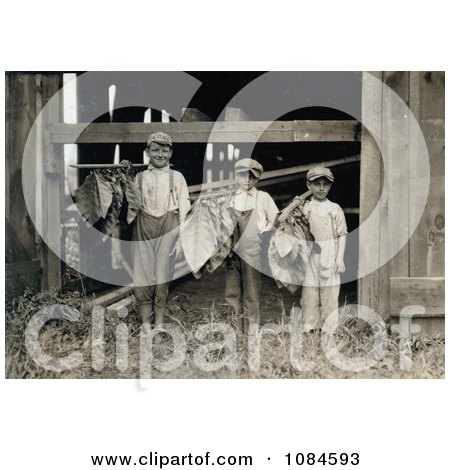Three Leaf Boys Carrying Tobacco Leaves While Working On A Farm In 1917 - Free Historical Stock Photography Photography by JVPD