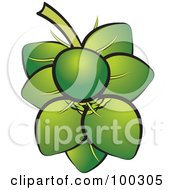 Royalty Free RF Clipart Illustration Of A Bunch Of Coconuts by Lal Perera