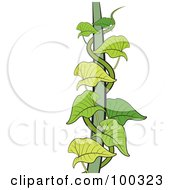 Royalty Free RF Clipart Illustration Of A Green Creeper Vine