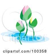 Colorful Lotus Buds
