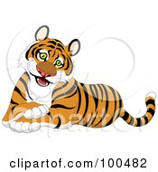 Friendly Male Tiger Sitting With His Front Paws Crossed