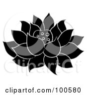 Black And White Lotus Flower Fully Bloomed