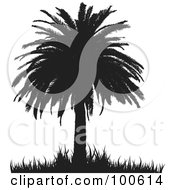 Royalty Free RF Clipart Illustration Of A Silhouetted Palm Tree With Thick Foliage And Grass