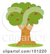 Lush Cherry Tree