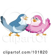 Happy Blue And Pink Bird Couple Embracing