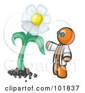 Royalty Free RF Clipart Illustration Of An Orange Man Scientist Admiring A Giant White Daisy Flower by Leo Blanchette