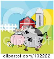 Chubby Gray Cow Eating A Daisy By A Silo And Barn