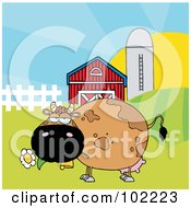 Chubby Brown Cow Eating A Daisy By A Silo And Barn