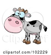 Royalty Free RF Clipart Illustration Of A Gray And Black Baby Cow