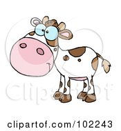 Royalty Free RF Clipart Illustration Of A White And Brown Baby Cow