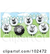 Royalty Free RF Clipart Illustration Of A Group Of White Sheep Looking At A Black Sheep In A Pasture by Cory Thoman