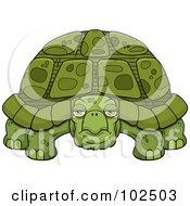 Grumpy Old Tortoise