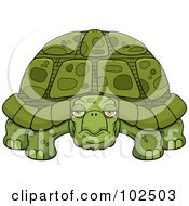 Royalty Free RF Clipart Illustration Of A Grumpy Old Tortoise by Cory Thoman