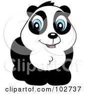 Poster, Art Print Of Cute Blue Eyed Panda