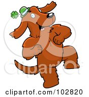 Royalty Free RF Clipart Illustration Of A Dancing Irish Dog Wearing A Green Clover Hat by Cory Thoman