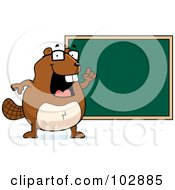 Royalty Free RF Clipart Illustration Of A Teacher Beaver Pointing To A Chalk Board by Cory Thoman