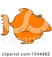 Orange Fish With A Big Nose