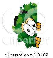 Tree Mascot Cartoon Character Peeking Around A Corner