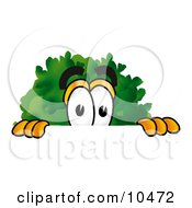 Clipart Picture Of A Tree Mascot Cartoon Character Peeking Over A Surface