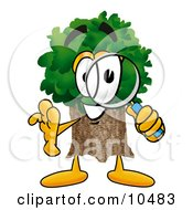 Tree Mascot Cartoon Character Looking Through A Magnifying Glass