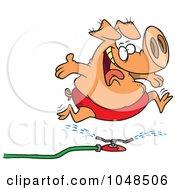 Royalty Free RF Clip Art Illustration Of A Cartoon Pig Running Through A Sprinkler