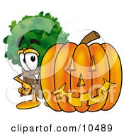 Tree Mascot Cartoon Character With A Carved Halloween Pumpkin