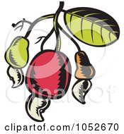 Royalty Free Vector Clip Art Illustration Of A Cashew Fruit On A Tree