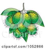 Royalty Free Vector Clip Art Illustration Of Green Rambutan Fruits by Lal Perera