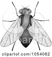 Royalty Free Vector Clip Art Illustration Of A House Fly by vectorace
