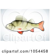 Perch Fish