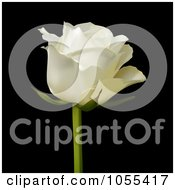 Royalty Free Vector Clip Art Illustration Of A Single White Rose On Black by elaineitalia
