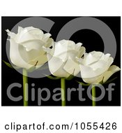 Royalty Free Vector Clip Art Illustration Of Three White Roses On Black by elaineitalia