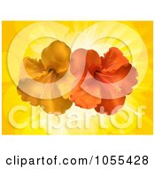 Royalty Free Vector Clip Art Illustration Of Orange And Red Hibiscus Flowers Over Yellow Rays by elaineitalia