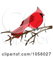 Red Cardinal Resting On A Bare Branch