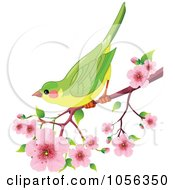 Green Bird Perched On A Branch Of Cherry Blossoms