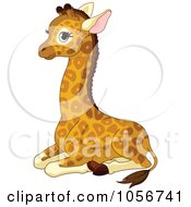 Cute Baby Male Giraffe Sitting