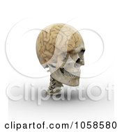 3d Transparent Skull With The Visible Brain 3