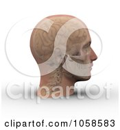 Royalty Free CGI Clip Art Illustration Of A 3d Skull And Brain Showing Through Transparent Skin On A Male Head 2 by Michael Schmeling