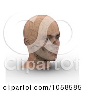 Royalty Free CGI Clip Art Illustration Of A 3d Skull And Brain Showing Through Transparent Skin On A Male Head 3