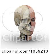 3d Male Head Showing Half With Flesh Half With Bone 2