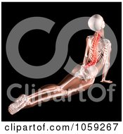 Royalty Free CGI Clip Art Illustration Of A 3d Female Skeleton Stretching With A Highlighted Spine